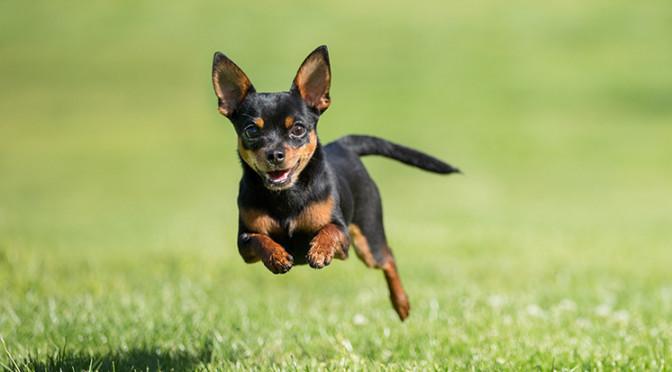 Furti: rubano anche il cane