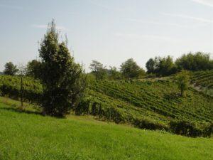 , le vigne dell'Azienda Agricola Vinicea