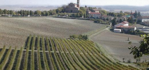 vigne in Monferrato