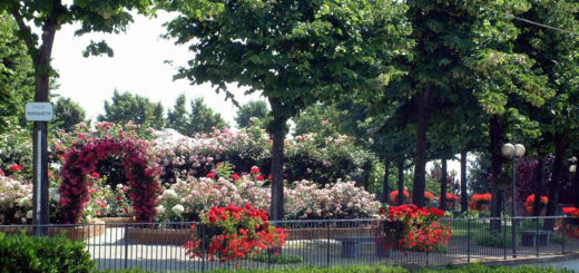piazza moncravetto fiorita