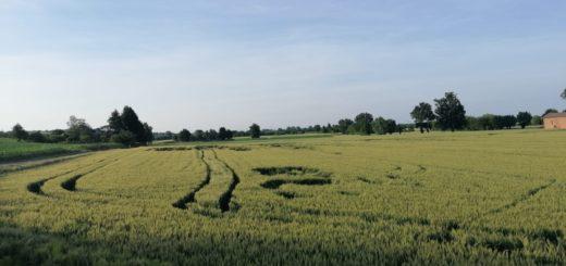 veduta campo grano - foto m.b.