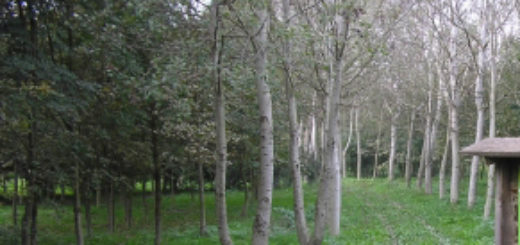 parco Valenza